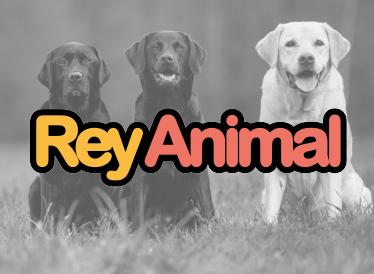 Rey Animal